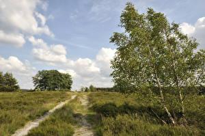 Фотографии Германия Лето Дороги Небо Деревья Трава Schierhorn Lower Saxony Природа
