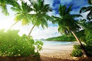 Фотография Тропики Деревья Пальмы Пляж