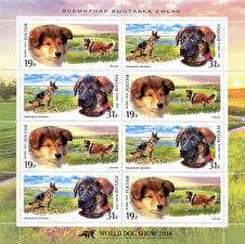 Обои Собаки Рисованные Почтовая марка World Dog Show 2016, Moscow, Russia Животные фото