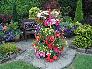 Обои Англия Сады Петунья Бегония Дизайн Walsall Garden