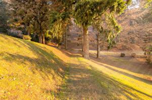 Обои Словения Осень Деревья Трава Kranj Природа фото