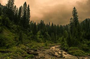 Обои Австрия Леса Ручеек Деревьев Kleinwalsertal Природа