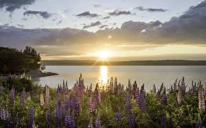 Фотография Австралия Пейзаж Рассветы и закаты Речка Небо Сидней Point Edward Природа