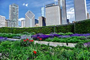 Картинка США Небоскребы Чикаго город Кусты Города