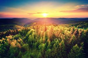 Обои Рассветы и закаты Пейзаж Леса Небо Солнце Природа
