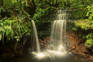 Фото Новая Зеландия Водопады Мох Leith Valley Dunedin Otago