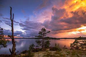 Фотография Финляндия Пейзаж Рассветы и закаты Озеро Ель Облака Природа