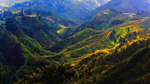 Обои Вьетнам Горы Поля Sapa Природа фото