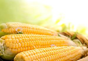 Картинки Кукуруза Вблизи Еда