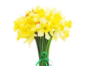 Картинка Нарциссы Букет Белый фон Желтые цветок