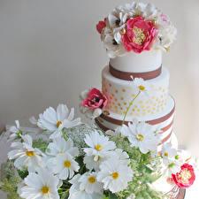 Фотография Сладости Торты Космея Ветреница Дизайна Продукты питания Цветы