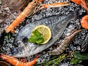 Обои Морепродукты Рыба Креветки Лимоны Лед Еда фото