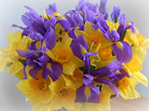 Фото Букет Ирис Нарциссы цветок