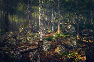 Обои Россия Леса Крым Камни Ствол дерева Alupka Природа фото