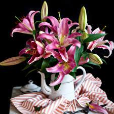 Обои Лилии Чайник Бутон Черный фон Цветы фото