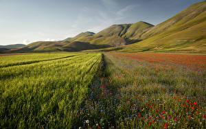 Фотография Италия Пейзаж Горы Поля Маки Castelluccio Umbria Природа