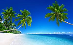 Фото Море Тропики Пальмы Пляж Деревья