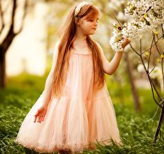 Фотографии Девочки Платье Волосы Дети