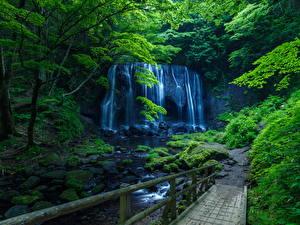 Фото Водопады Скала Деревья