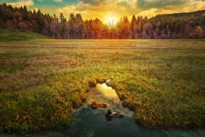 Картинки Рассветы и закаты Леса Поля Пруд Утки HDRI Природа