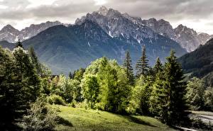 Картинка Словения Горы Ель Деревья Природа