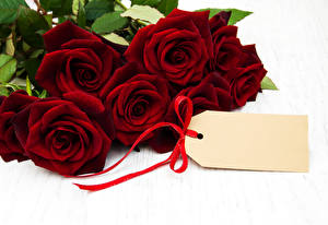 Обои Розы Белый фон Бордовый Шаблон поздравительной открытки Цветы