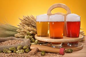Картинка Напитки Пиво Пшеница Стакане Трое 3 Колос Продукты питания