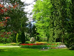 Фото Словения Парки Деревья Газон Mozirski gaj Природа