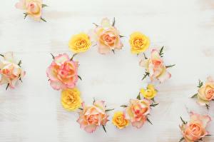 Обои Розы Дизайн Цветы фото