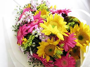 Обои Букеты Герберы Подсолнухи Цветы фото
