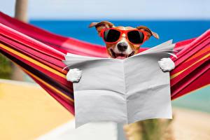 Обои Собака Джек-рассел-терьер Очки Пляжа Газетой Забавные Животные