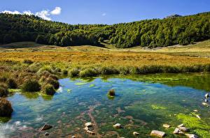 Фотографии Италия Леса Озеро Трава Barrea Природа