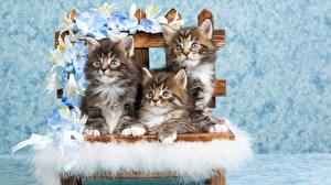 Обои для рабочего стола Кошки Лилии Котята Трое 3 Скамейка Животные