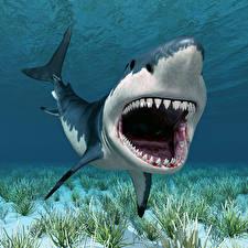 Картинки Подводный мир Акулы Зубы 3D_Графика
