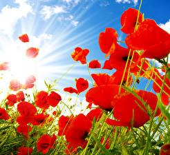 Картинки Мак Крупным планом Небо Лучи света Красных Цветы