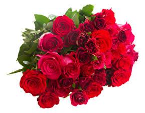 Фотографии Букеты Розы Бордовый Белый фон Цветы