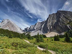 Фотографии Канада Парки Гора Небо Пейзаж Ель Трава Peter Lougheed Provincial Park Природа