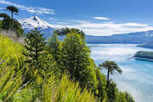 Фото Чили Парки Речка Горы Пейзаж Деревья Conguillio National Park Природа