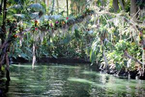 Картинки США Парки Диснейленд Озеро Калифорния Анахайм Природа