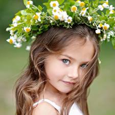Обои Ромашка Девочка Русые Взгляд Волос Милые ребёнок
