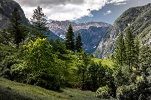 Фотография Словения Горы Деревья Trenta Valley Природа