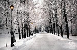 Фотография Санкт-Петербург Зимние Парк Аллея Деревьев Снегу Природа