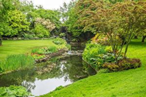 Фотографии Англия Парки Пруд Лондон Деревья Траве Hyde Park Природа