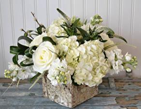 Обои Букеты Розы Левкой Гортензия Белый Цветы фото