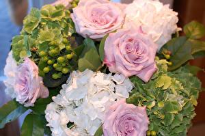 Обои Розы Гортензия Букеты Цветы фото
