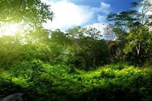 Фотография Тропики Кусты Деревья Jungle