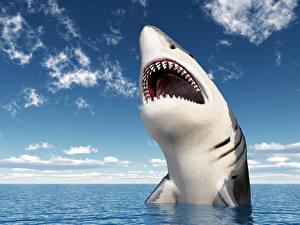 Обои Акулы Море Небо Векторная графика Зубы Животные