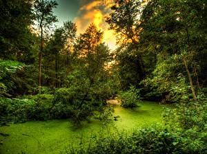Обои Леса Дерева Кусты Болоте
