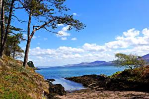 Обои Ирландия Берег Пейзаж Деревья Kenmare Bay Kerry Природа
