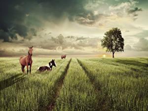 Фото Пейзаж Поля Небо Лошади Деревьев Животные Природа